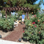 rose garden Eagle Scout project